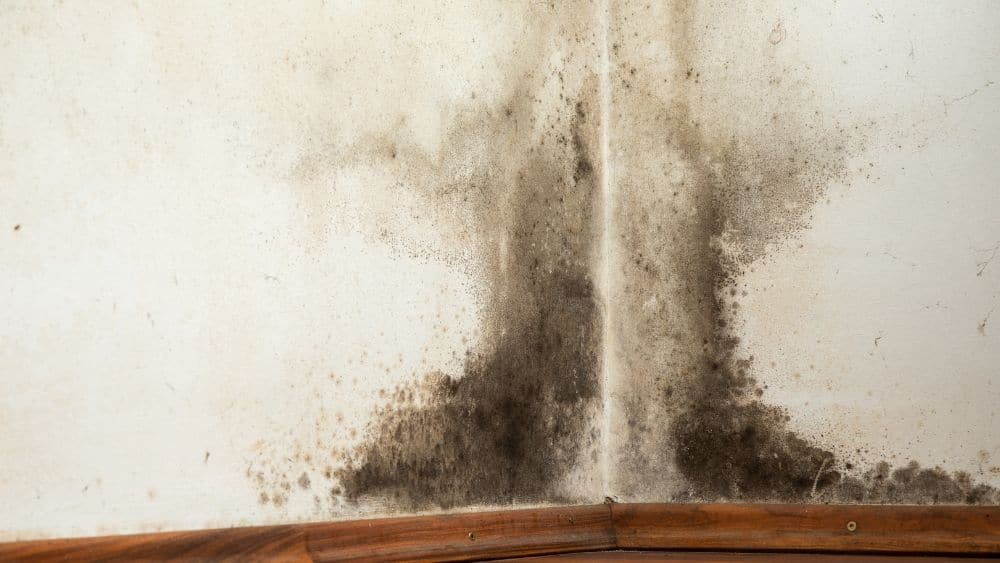 Can mould growth damage the wellbeing of your family?
