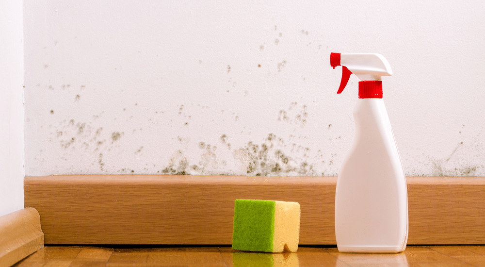 Clove oil for mould: Does it really work?