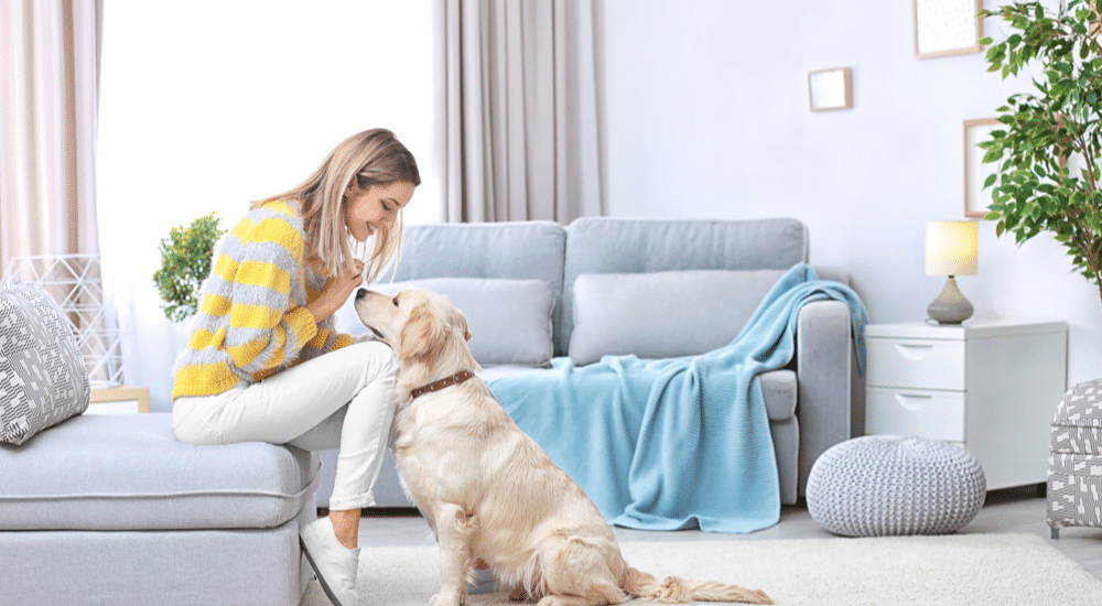 Steps you can take to reduce pet allergens in your home